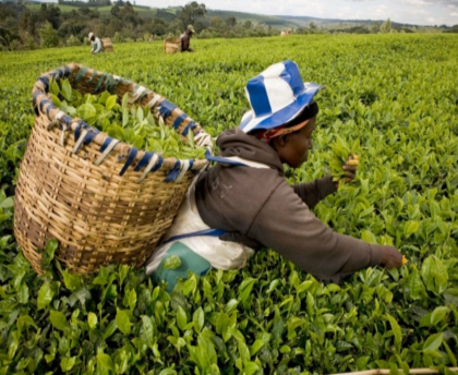 Unilever: Time for Real Leadership on Human Rights